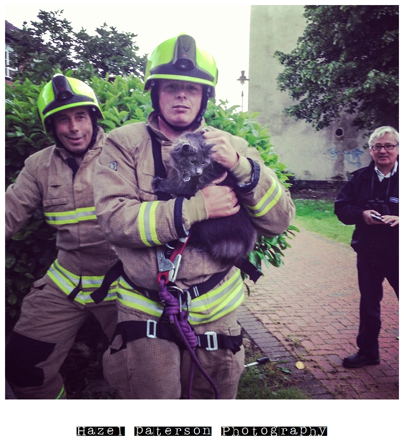cat in tree, cat rescued by firemen, poppy bumface
