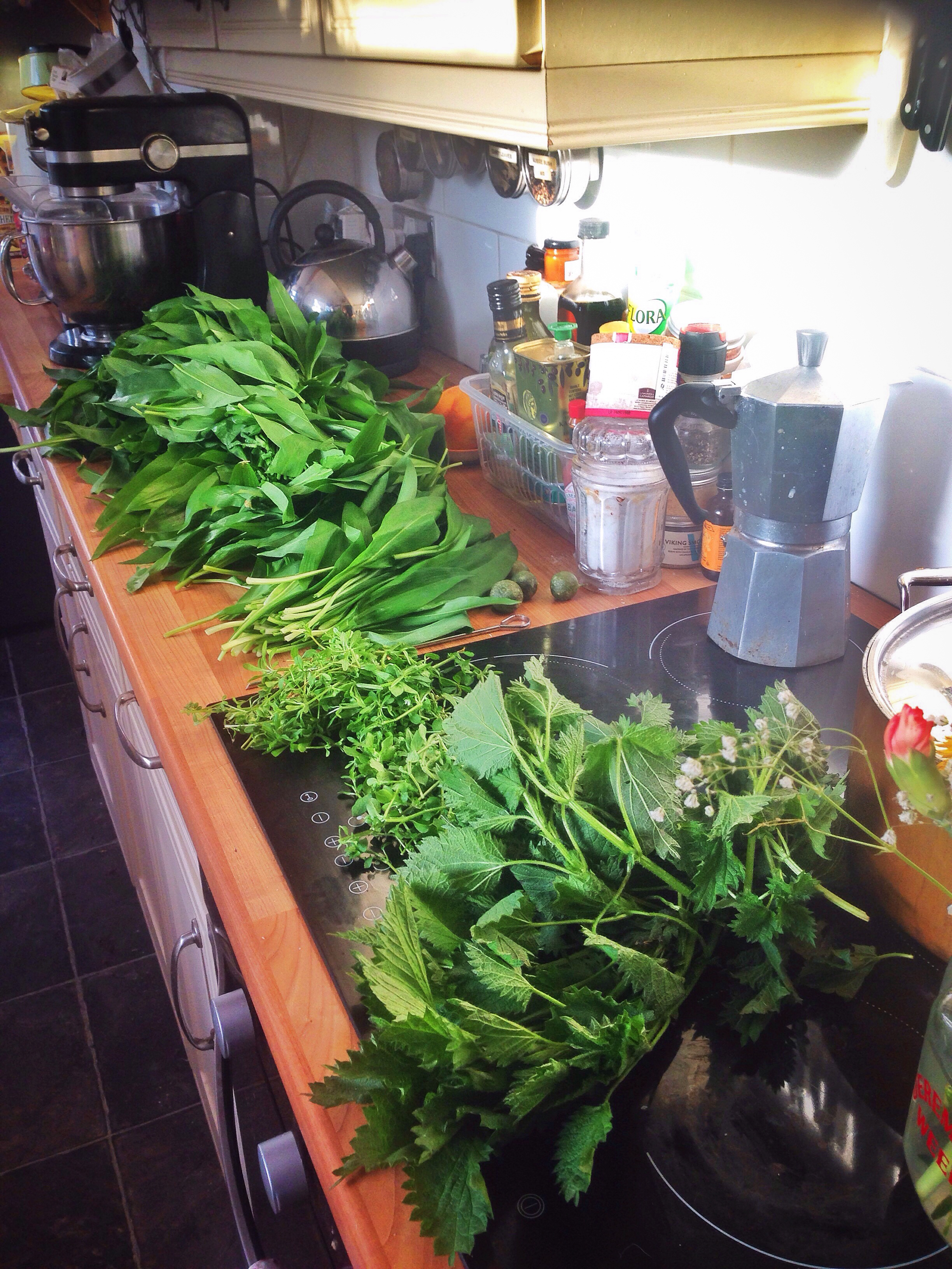 a kitchen full of foraged wild garlic, nettles, goose grass and chickweed